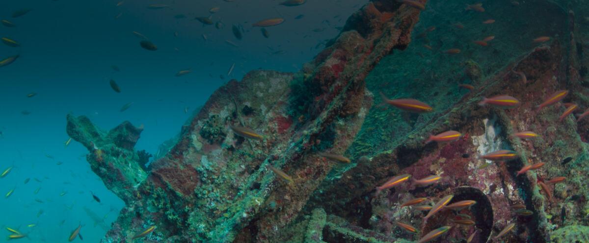 Conservation of Sri Lanka's Marine Heritage
