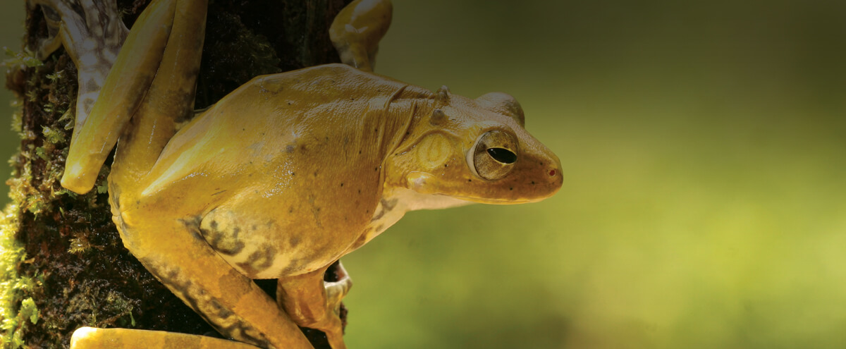 Novel Species Paving the Way for Biodiversity Conservation