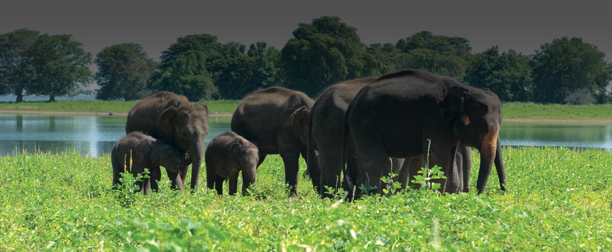 Udawalawe Wildlife Programme