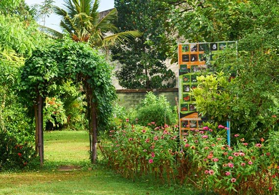 Dilmah Butterfly Garden, Sri Lanka - Butterfly ...
