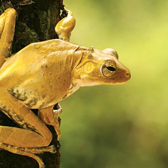Dilmah Bio diversity - Frog