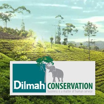 Dilmah Conservation Logo with a Background Picture of a Tea Estate