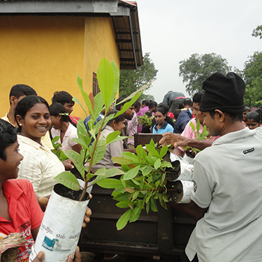 People Joining into Plant Saplings