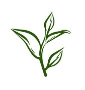 Sketch of Tea Leaves