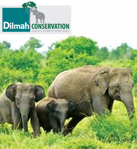 The establishment of Dilmah Conservation
